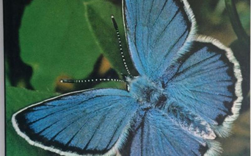 Front Cover of Butterflies by Thomas C Emmel