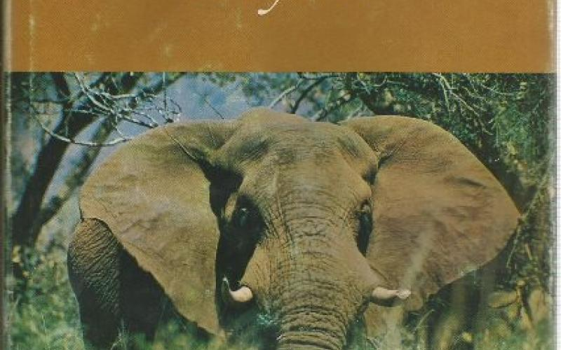 Front cover of The Elephants of Knysna by Nick Carter