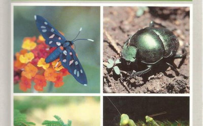 Front Cover of Field Guide to the Insects of the Kruger National Park by Leo Braack