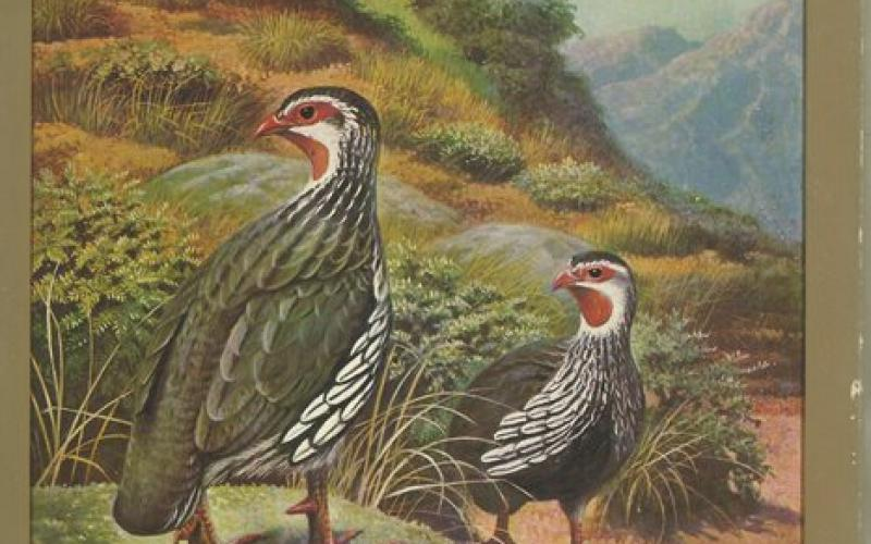 Front cover of Gamebirds of Southern Africa by P A Clancey