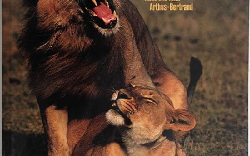 Front Cover of Lions by Anne and Yann Arthus-Bertrand