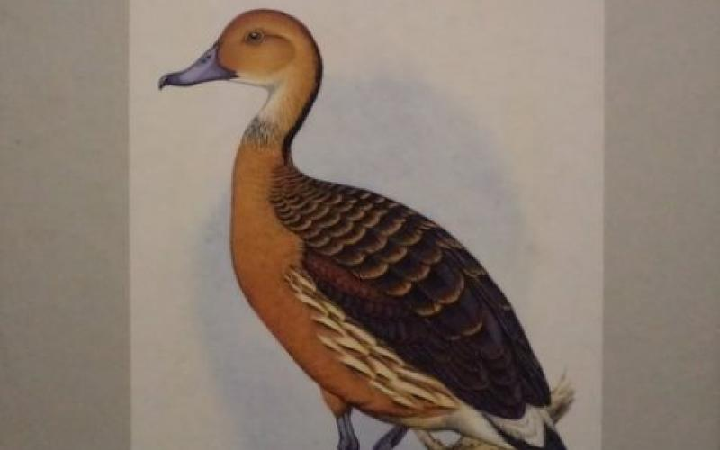 Front slipcase cover of Gamebirds & Waterfowl of Southern Africa by C. G. Finch-Davies