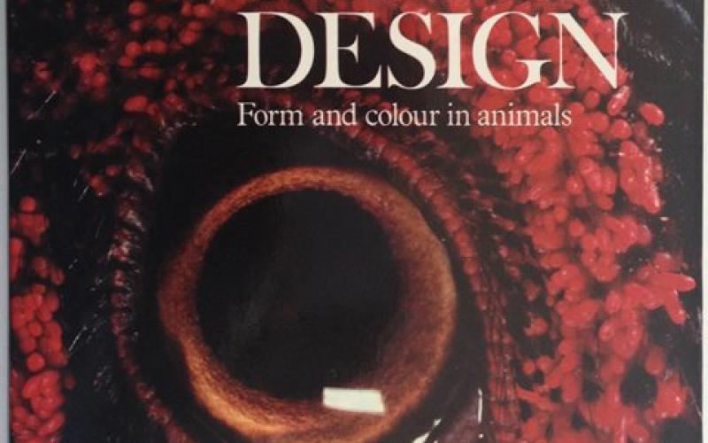 Front Cover of The Grand Design by Sally Foy