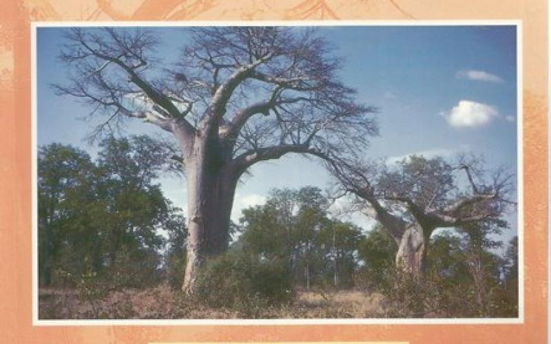 Front Cover of The Kruger National Park by Jane Carruthers