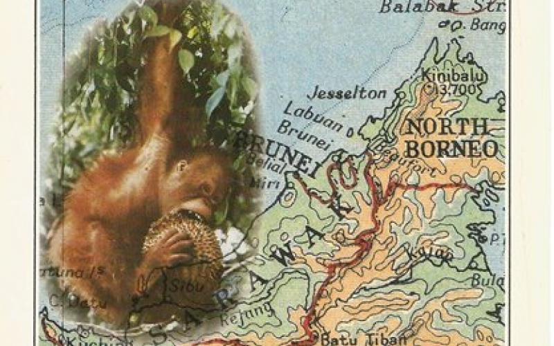 Front Cover of Orang-Utan by Barbara Harrisson
