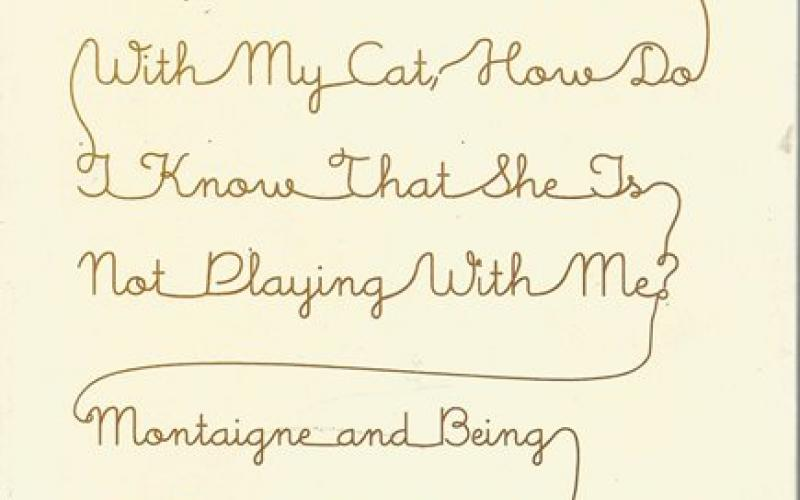 Front cover of When I am Playing with My Cat by Saul Frampton
