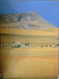 Back Cover of Skeleton Coast by Amy Schoeman